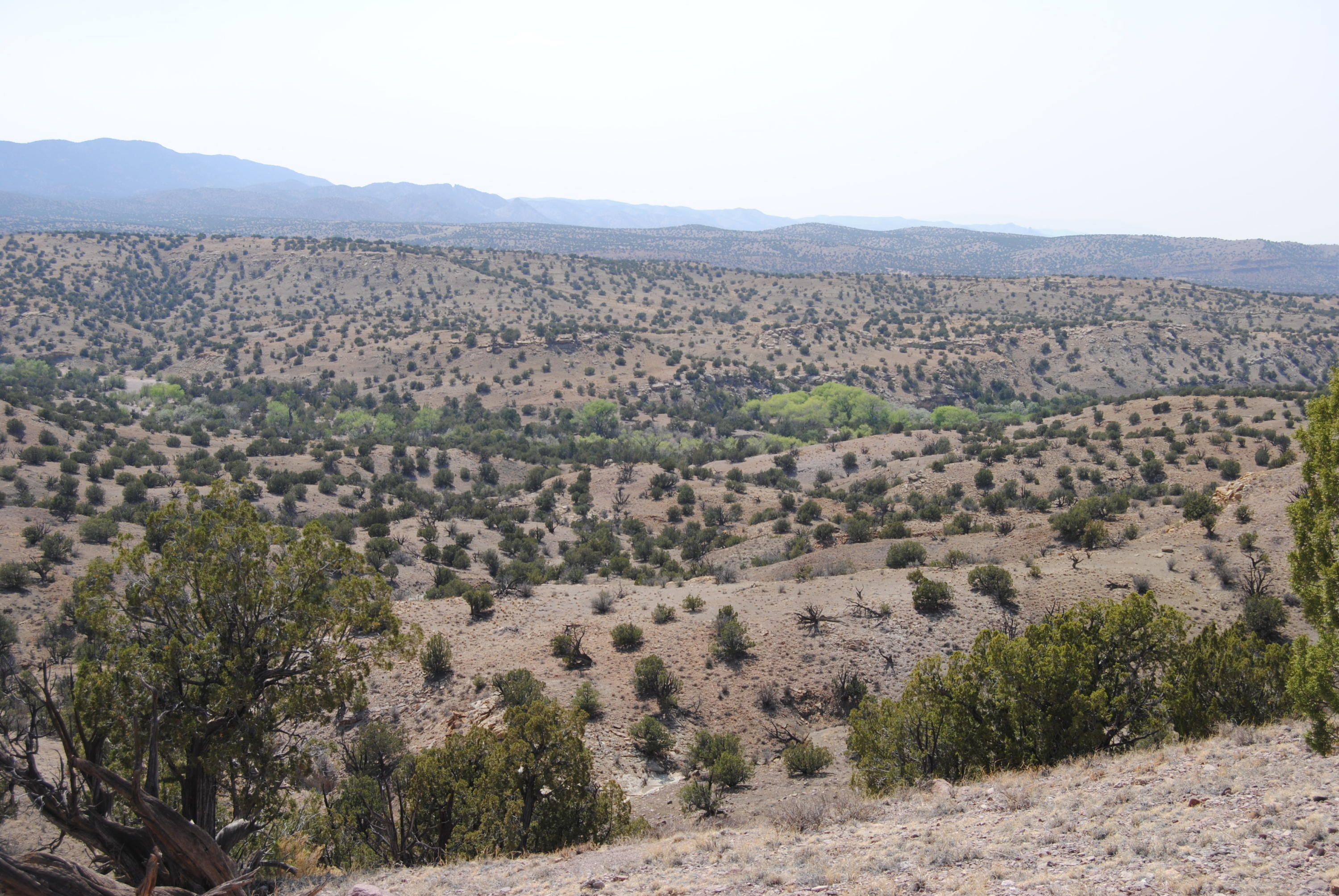 Abbe Springs Ranches Development Real Estate Listings Main Image