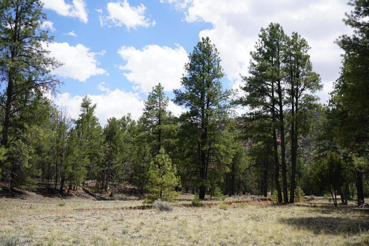 Timber Lake Property Photo - Ramah, NM real estate listing