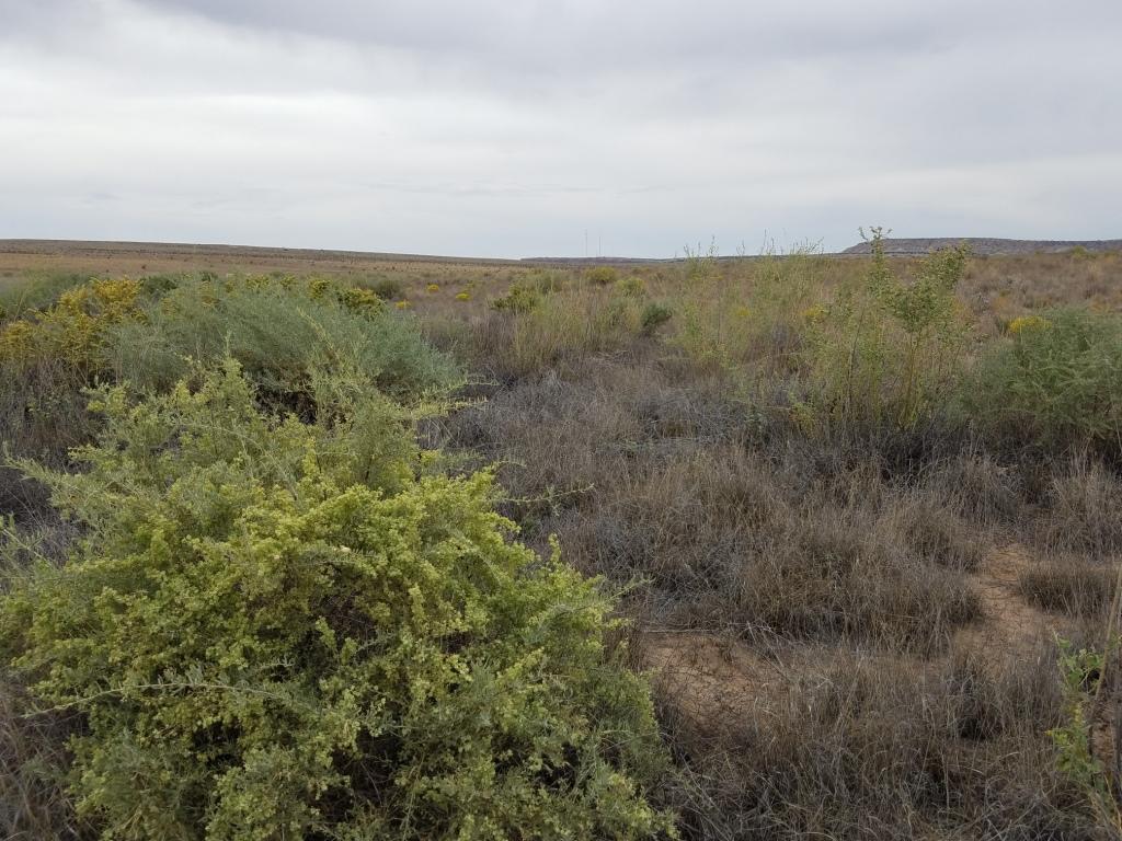 Apache Canyon Ranch Real Estate Listings Main Image