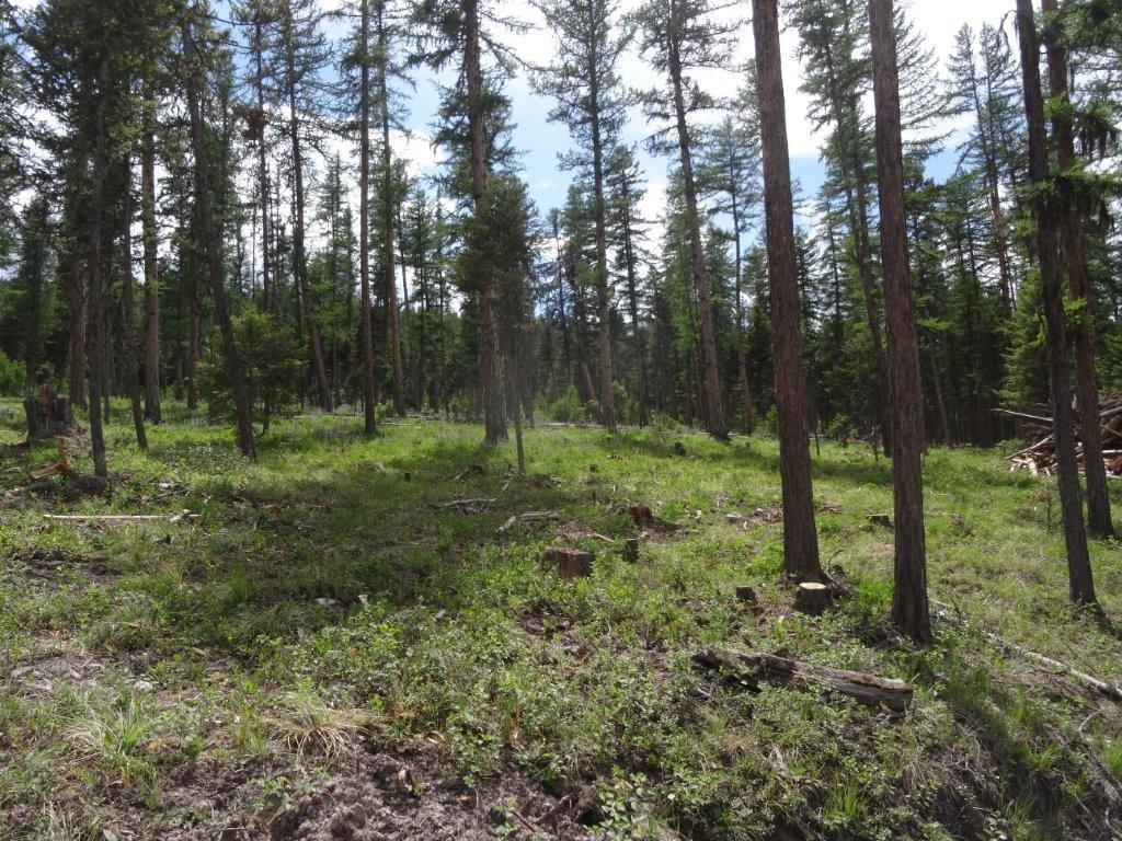 Tract 2 S Placid Lake Road, Seeley Lake, MT 59868 - Seeley Lake, MT real estate listing