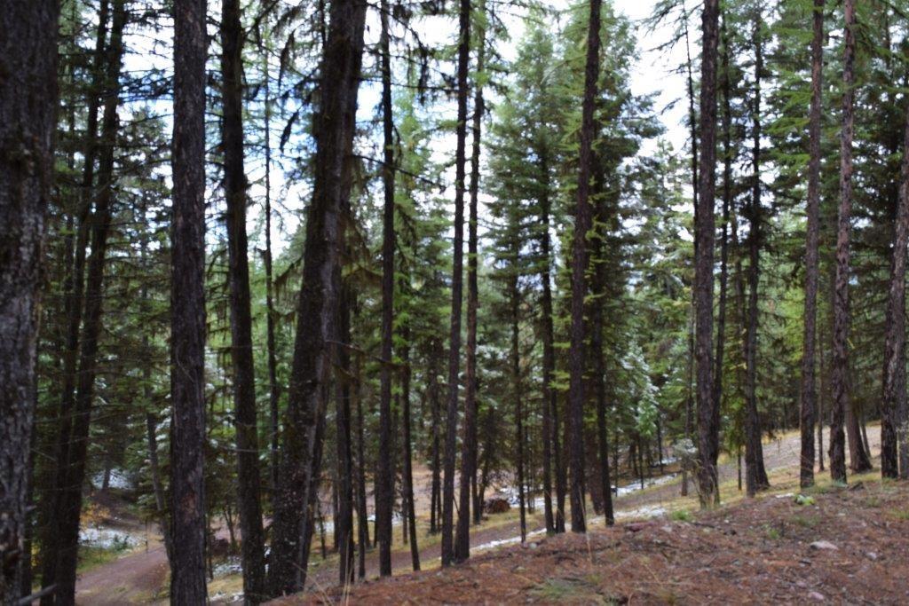 378 Bobcat Lane, Seeley Lake, MT 59868 - Seeley Lake, MT real estate listing