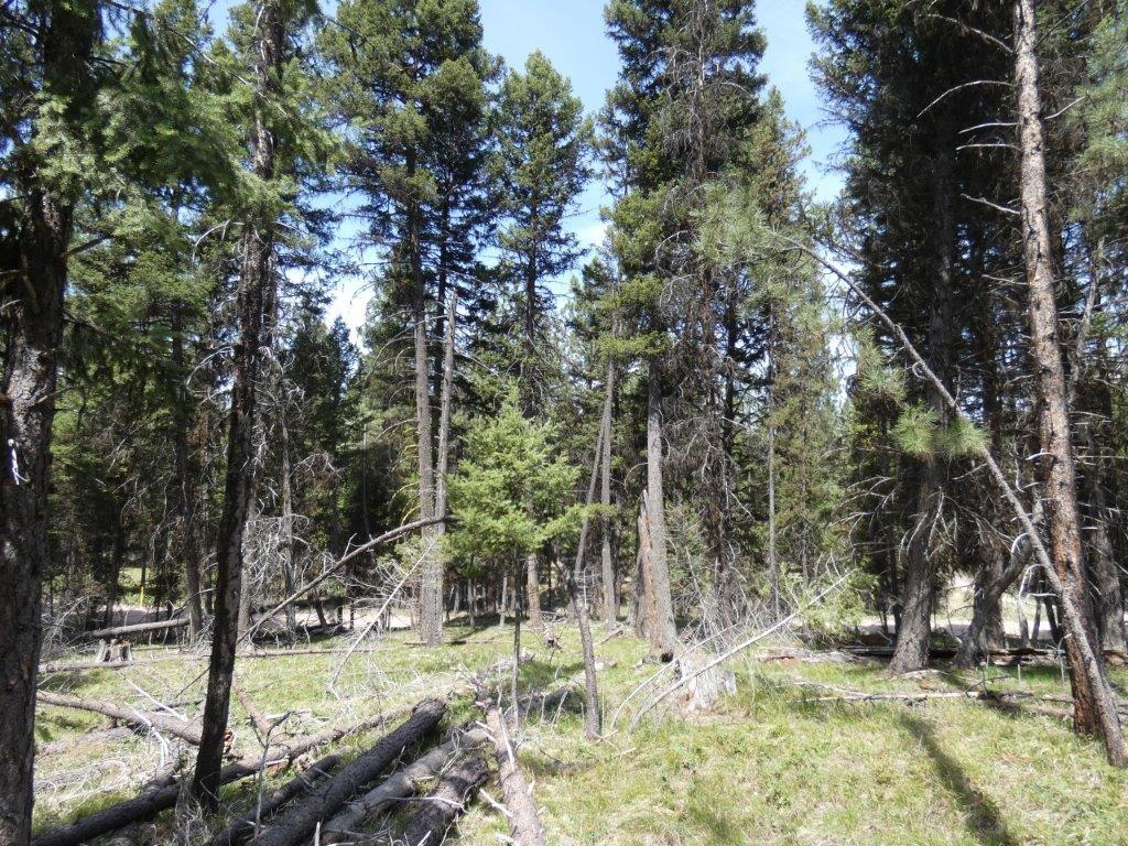 1274 Grandview Drive Property Photo - Seeley Lake, MT real estate listing